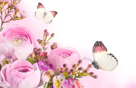 pink butterfly flower